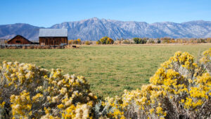 Day trips from Reno - Carson Valley
