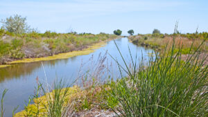 Day trips from Reno - Fallon Stillwater National Wildlife Refuge